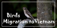 Front-Index-Banner_200x100_birds_migration_to_vietnam