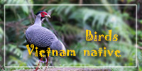 Front-Index-Banner_200x100_birds_vietnam_native