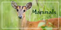 Front-Index-Banner_200x100_mammals